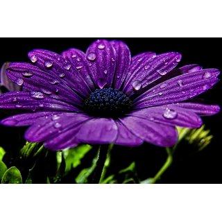 Mesleep Dew On Flower Canvas