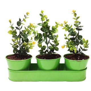 3 Planters with Tray
