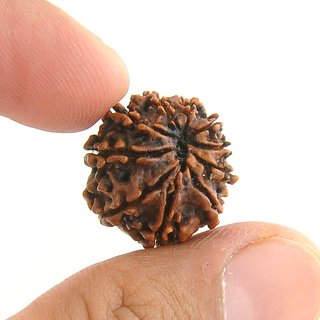 Ten Mukhi Rudraksha with Lab Certificate