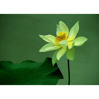 Buy seeds lotus flower green lotus green flower 5 online get 64 off seeds lotus flower green lotus green flower 5 mightylinksfo