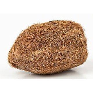 Astrology Goods Ekaksi Nariyal / Coconut - A Very Rare Lucky Charm