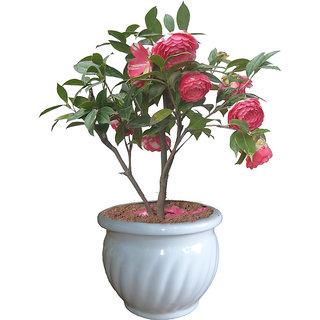 Fiber Flower Pot (Kharbooja)