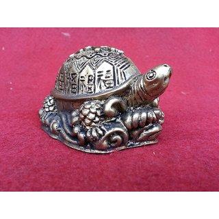 divya Tortoise