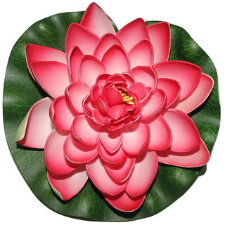Divya Lotus Flower, Dry Flower , Floating Flower , Attractive Beautiful Lotus Flower