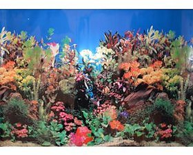AQUARIUM FISH TANK SINGLE SIDED BACK GROUND POSTER 24 INCHES HEIGHT