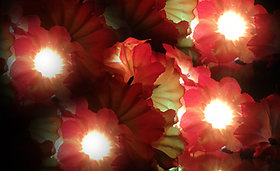 VRCT Yellow Orange Flower String Light (Multicolor)