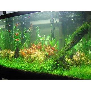 Seeds-Aquatic Plant-Aquarium Plant Seed- More Than 100 Mix