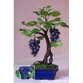 Seeds-The Golden Fruit Grape Healthy Fruit Bonsai