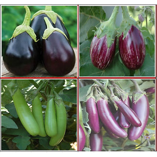 Seeds-Hybrid Brinjal Kit 4 Types For Commercial Farming Gardening 100 Nos Each