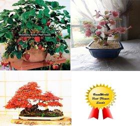 Seeds-Cherry Blossom+Strawberry + Maple Bonsai Tree -Total 50 Bonsai Pack