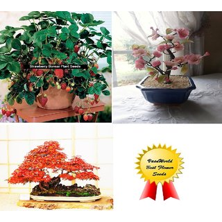 Seeds-Cherry Blossom+Strawberry + Maple Bonsai Tree -Total 50 Bonsai Pack