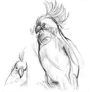 Bird Pencil Sketch