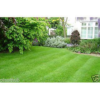 Seeds-Turf Grass - Cynodon Dactylon - Live Green Soft Carpet -Pack Of 1000