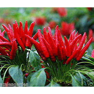 Seeds-30 Red Pepper Chili Capsicum Frutescens Organic Vegetables - Rare