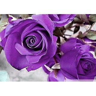 Seeds-Hot Purple Rare Rose Beautiful Flower