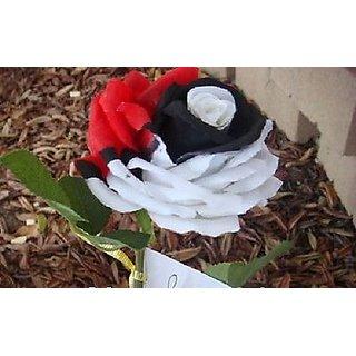 Seeds-Beautiful Red Black Pearl Rose Flower
