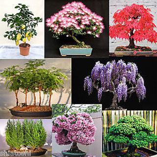 Seeds-Bonsai Mixed 24 Redwood/Maple/Mimosa/Wisteria/Sakura/Pine/Cypress/Lemon