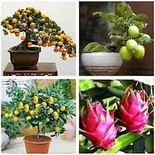 Seeds-Bonsai Tree Mix - Kumquat, Lemon, Guava, Orange - Fresh