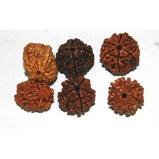 Natural Pure 2,3,4,5,6,7 Mukhi (Face) Rudraksh Rudraksha (6 pieces) + GIFT