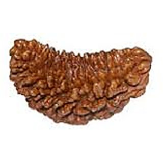Original Tested and Certified Eka Mukhi Rudraksha