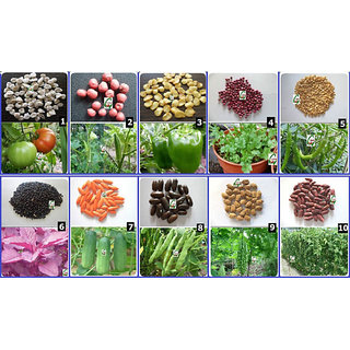 Seeds-Vegetable Hybrid Lot-Mini-X For Kitchen Terrace Balcony Gardening 10 Items