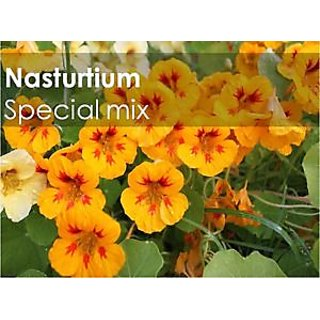 Seeds-Green Octane Nastursium Special Mix Flower