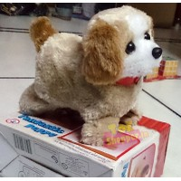 Puppy Dog With Somersault