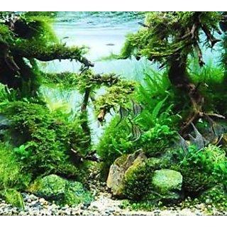 Seeds-Aquarium Fish Tank Grass Aquatic Plant
