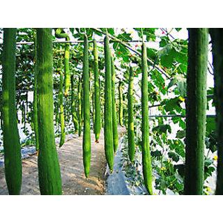 Seeds-Long Luffa Sponge Cucumber Organic Vegetable