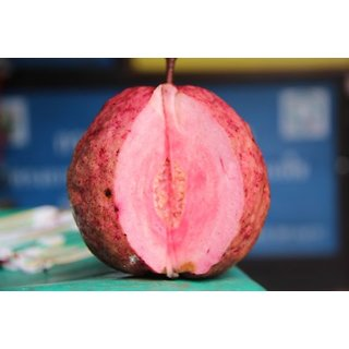 Seeds-Guava Red Tropical Fruit