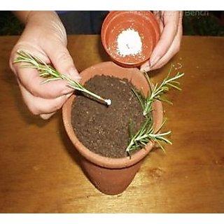 Herbal Root Hormone Plant Rooting Hormone For Cuttings Grafting ten Grams