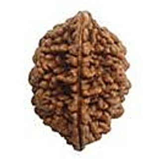 Certified Two (Do) Mukhi Nepali Rudraksha FROM KZ