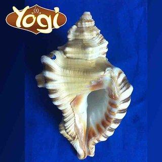 Yogi Ganesh shankh Conch