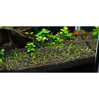 Mixed Aquarium Plant Seeds 30 Seeds Pack + Aquarium Soil 200 Gm Pack
