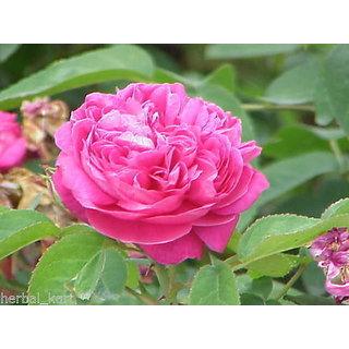 Gulab - Rose Flower Powder 200Grms (50Grms x 4Packs)
