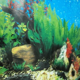 Aquarium tank wall poster 24 inch height double side 1 meter