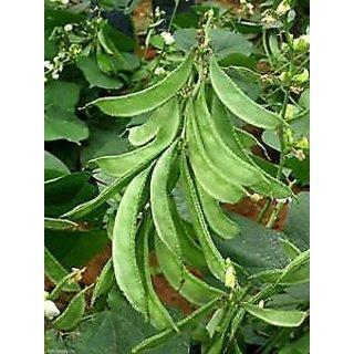 Seeds-Vegetable Lima Bean Phaseolus Lunatus Hybrid F 1 Standing Plant Seed- 20