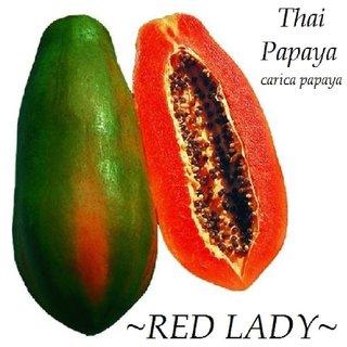 Seeds-Thai Papaya Short Tree Red 25