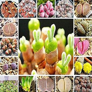 Seeds-Futaba Rare Mix Lithops Living Stones Succulent Cactus - 100 Pcs