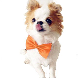 Futaba Fashion Dog Bowknot Tie - Orange