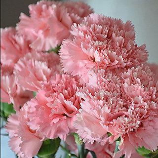 Seeds-Futaba Carnation Flower - 100