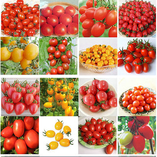 Seeds-Wacky Tomato Kit Hybrid Varieties Of Tomatoes 7 Packs