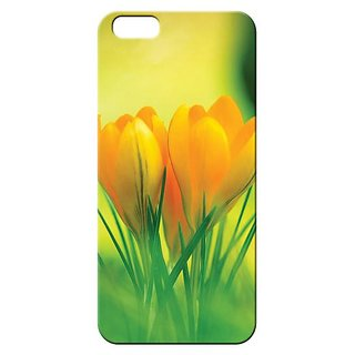 Back Cover for Samsung Galaxy Grand  By Kyra AQP3DGLXGNDNTR3059