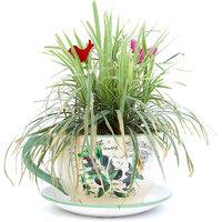 Deziworkz Ceramic Cup  Saucer Olive Planter (Dia 8.6)