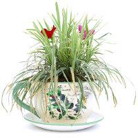 Deziworkz Ceramic Cup  Saucer Olive Planter (Dia 7.5)