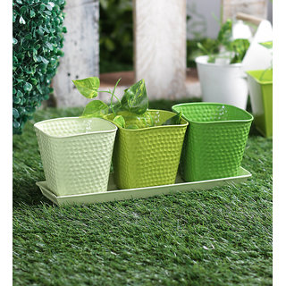 Set of 3 Herb Set Green
