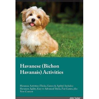 Havanese Bichon Havanais Activities Havanese Activities (Tricks, Games  Agility) Includes