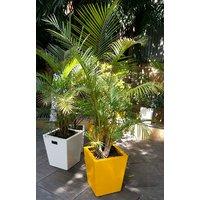 Medium Size Planters