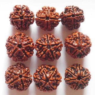 Rudra Gems 4,5,6 Mukhi Rudraksha NEPAL (9pcs)