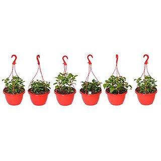Hanging Pot Red (Pack of 6)-MINERVA NATURALS